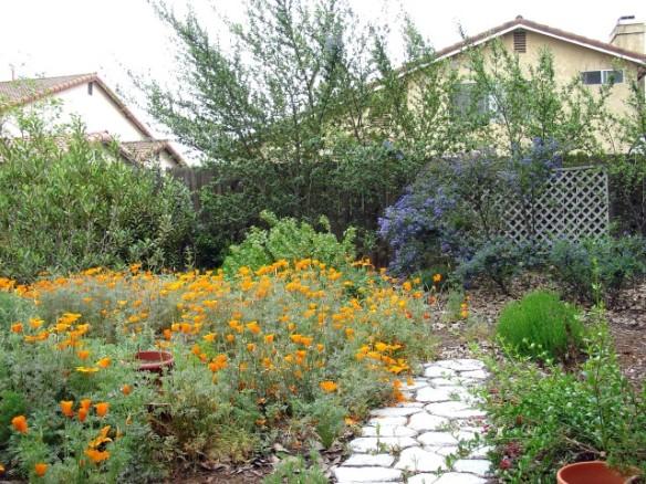 garden 2006 008 (Small)