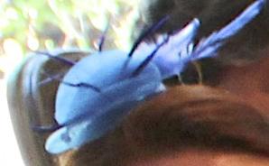 blue-fascinator