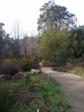 California native garden at the SF Botanical Garden--the sun did show itself this day!